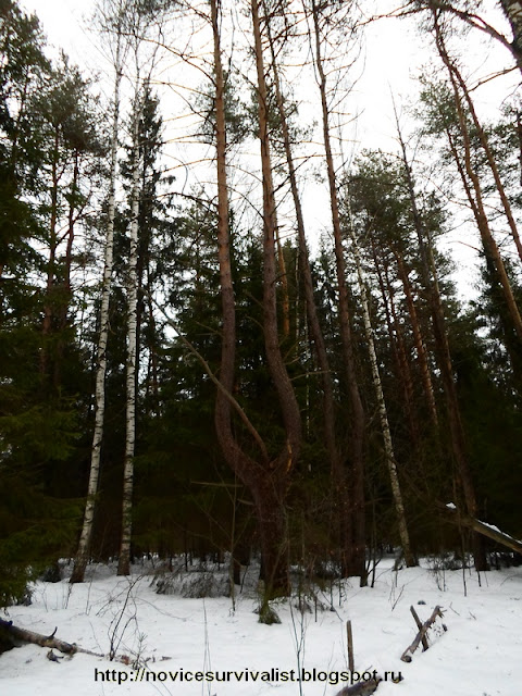 В лесу туристы видео выживальщиков в
