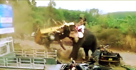 Elefante enfurecido destrói veículos durante festival na Índia