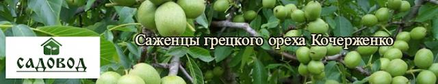 Саженцы грецкого ореха Кочерженко, 0961595554, 0500548724 Украина Садовод