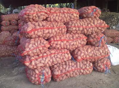 Картофель калиброванный в сетках оптом - Цена на картофель