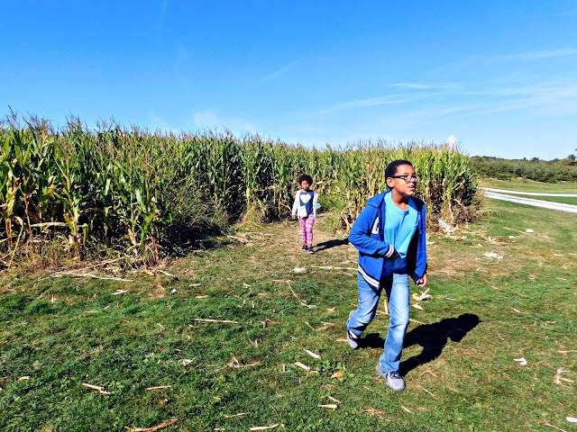 Out of the Patterson's Farm Corn Maze