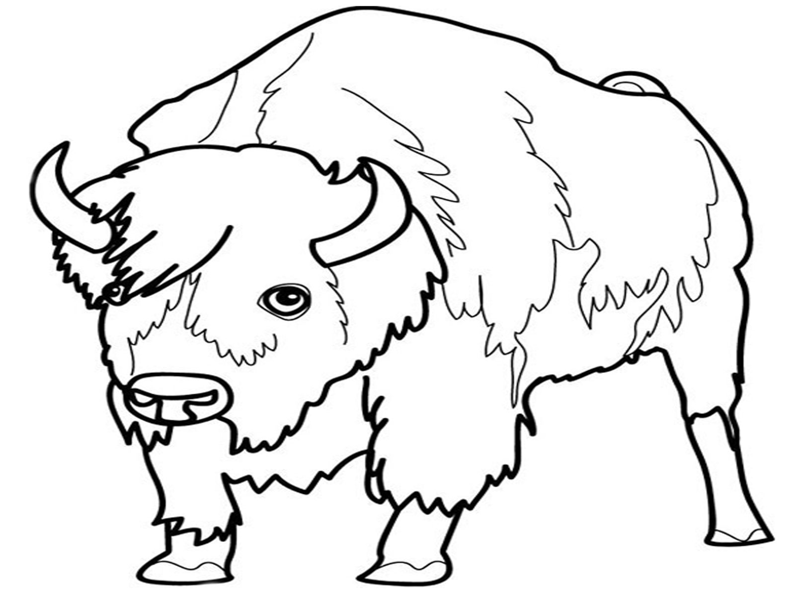 Bison Coloring Pages For Kids   Realistic Coloring Pages   free coloring pages animals realistic