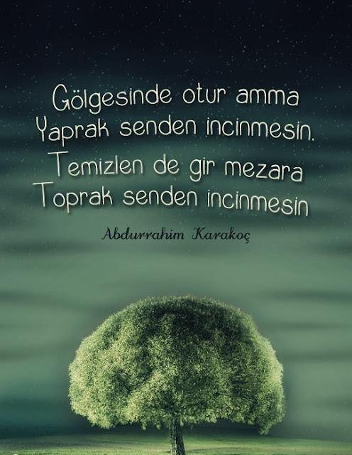 ağaç, yeşil, yeşil alan, mera, tek ağaç, şiir, Abdurrahim Karakoç