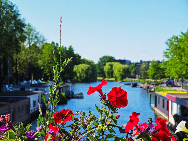 Petunias with the view of the canal and boathouses in Amsterdam.