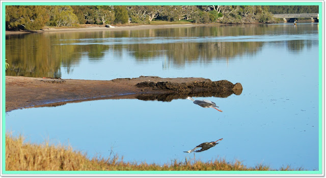 australian bird life