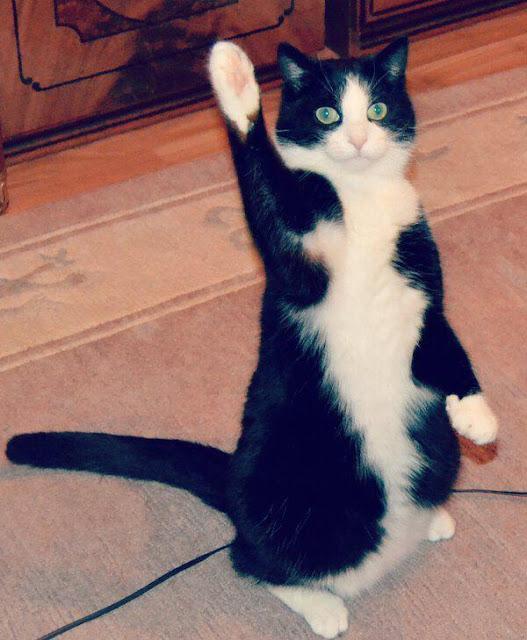 18 bức ảnh chân mèo mũm mĩm đáng yêu gần chết