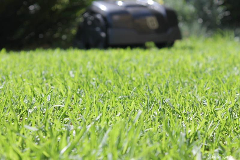 C mo plantar el c sped natural paso a paso y consejos guia de jardin - Plantar cesped natural ...