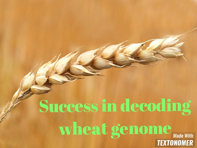 Success in decoding the genome of wheat to the scientists