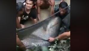 Warga Temukan Ikan Besar, Lihat yang Mereka Lakukan Hingga Akhir