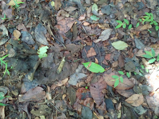 Thick layer of leaf litter on the ground