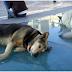 Πρόστιμο για όσους δεν μαζεύουν τις ακαθαρσίες του σκύλου από τους δρόμους και τα πάρκα
