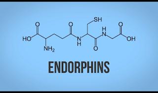 Hormon Endorfin, Hormon Endorphins, endorphins, senyawa kimia endorfin endorphins, rumus kimia endorfin, gambar hormon endorfin endorphins