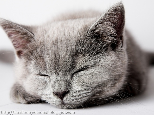 Beautiful sleeping cat.
