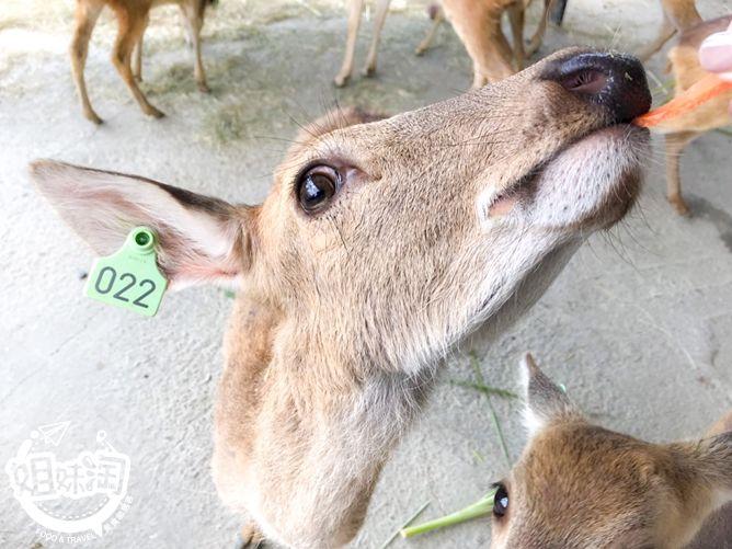 鹿境-恆春景點推薦