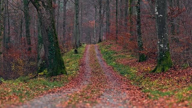 Outono do desapego
