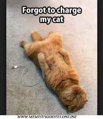 charge my cat