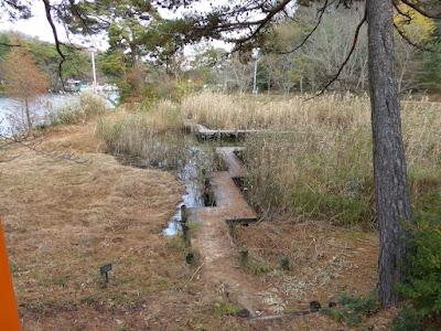 くろんど池 秋の湿生花園