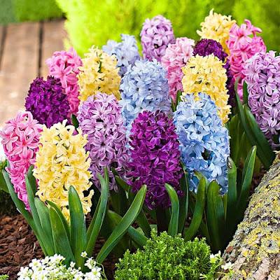 y nghia hoa da lan huong