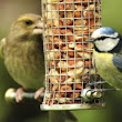 Homemade bird feeders versus wholesale ones | Bird Feeders