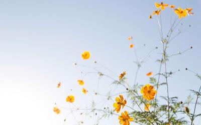 Papel de parede grátis de flores para pc em hd : Flores amarelas.