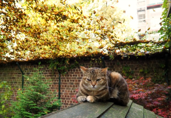 autumn pictures with cats