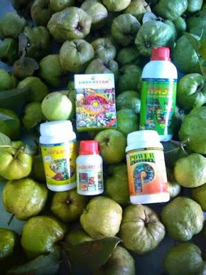 Image result for paket pupuk nasa untuk tanaman jambu biji