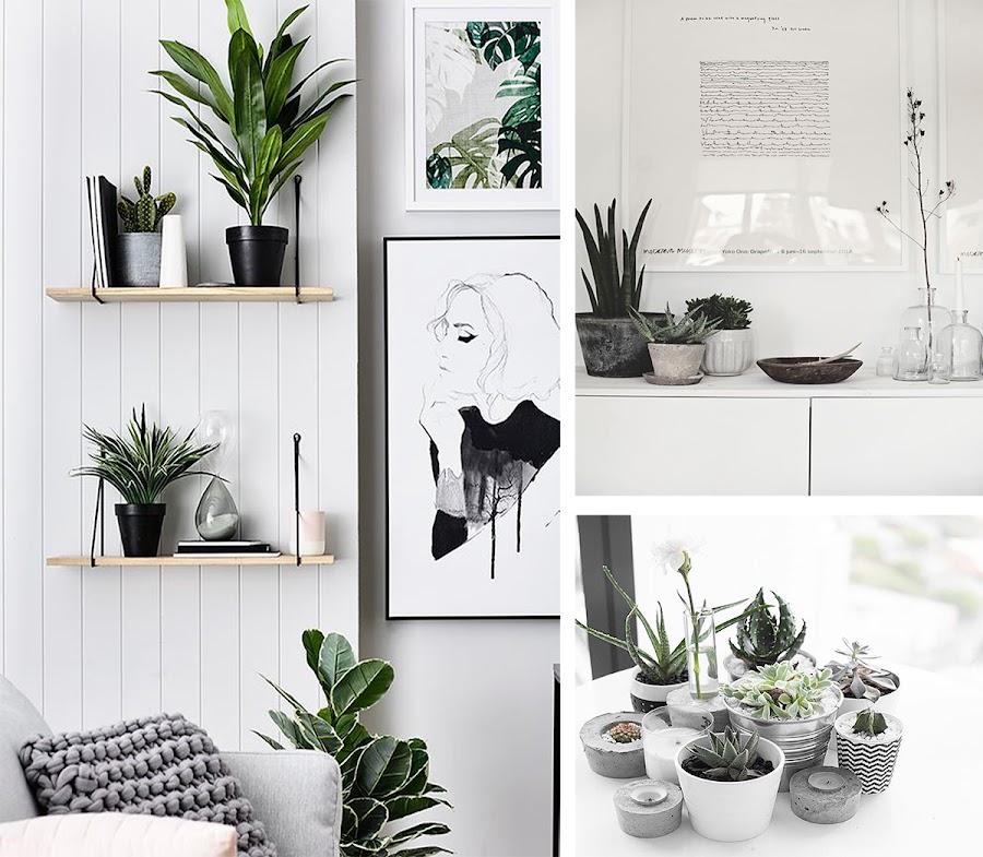 decorar con plantas, plantas, plantas estilo nordico, decoracion nordica, blanco y negro,