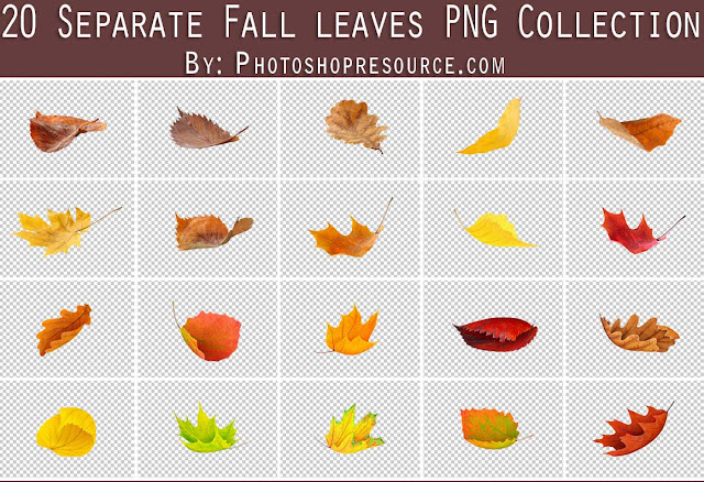 20 Separate Fall Leaves PNG