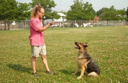 Huấn luyện chó đi bằng 3 chân