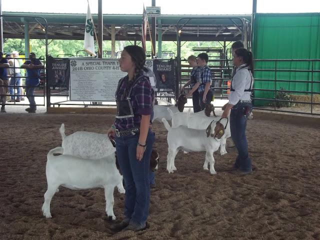 Ohio County Fair