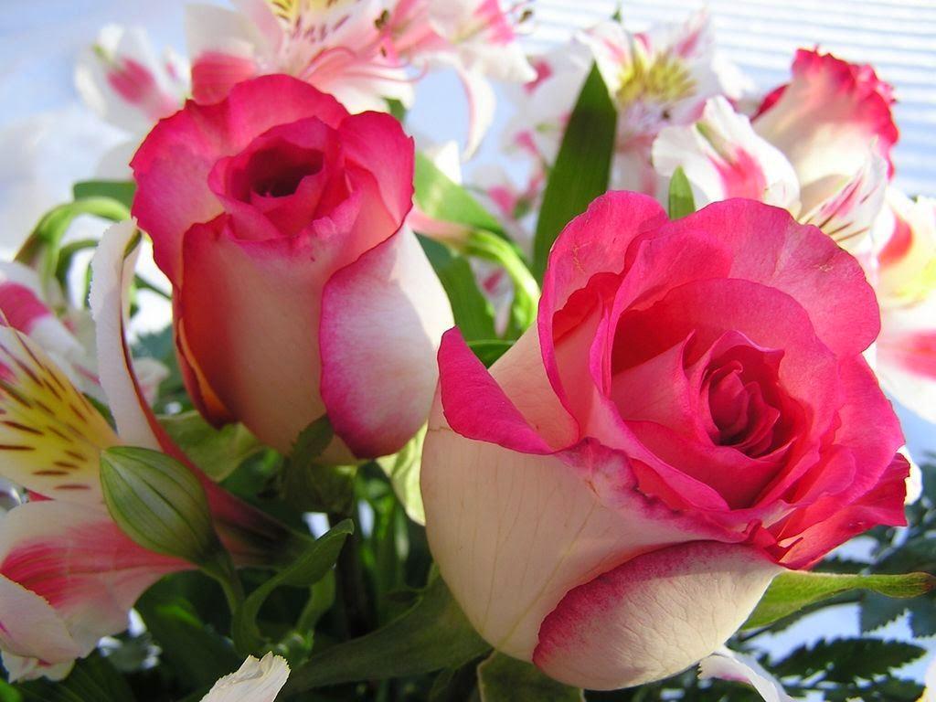 Hd photos of beautiful flowers gallery flower wallpaper hd photos of beautiful flowers hd wallsmiga beautiful flowers hd poze rase de pisici apartament si casa izmirmasajfo