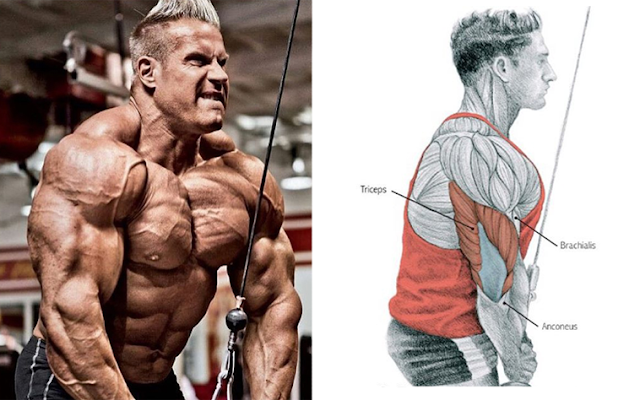 The 8 Best Muscle-Building Triceps Exercises!
