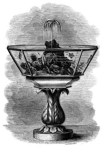 Damos un pequeño repaso a la historia del mantenimiento de mascotas acuaticas.