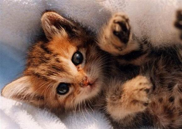 Best Profile Pictures: Cute Cat Picture Fluffy Cats Images