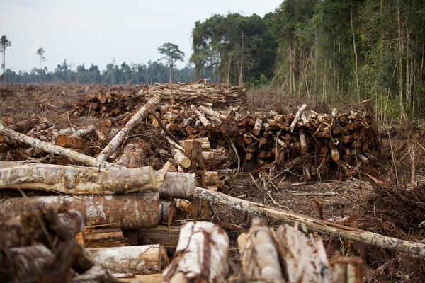 Pengadilan Negeri Pekanbaru Diminta Segera Eksekusi Perusahaan Perusak Hutan
