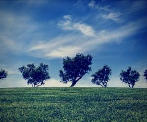 Philip Larkin's The Trees
