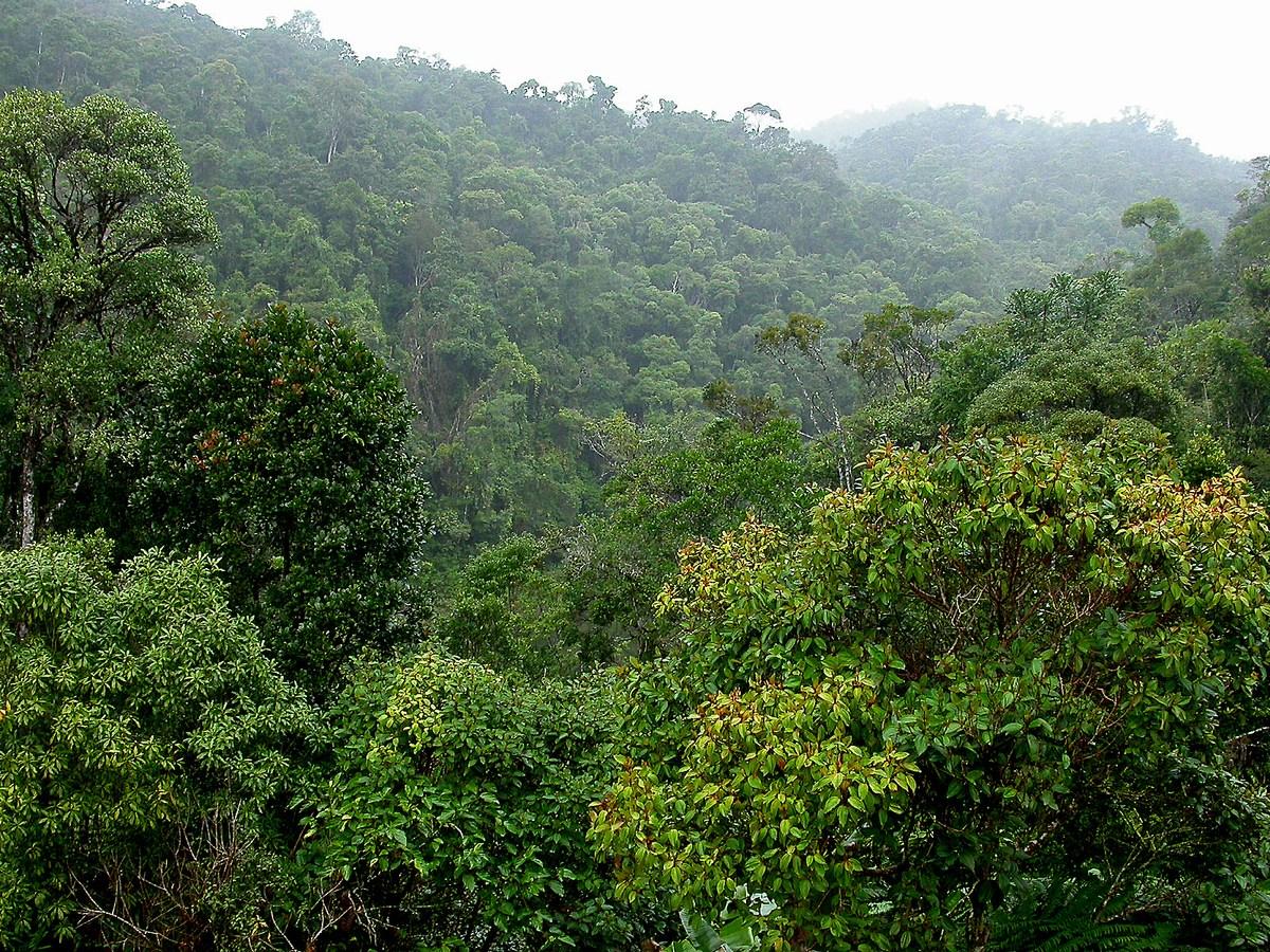 la forêt primaire de Ranomafana