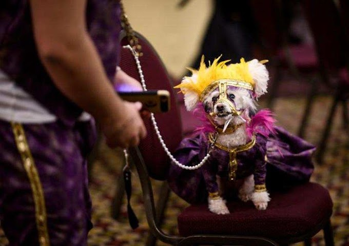 See pics from the New York Pet Fashion Show