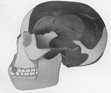 Wikipedia provides a great source of information on the Piltdown Man.