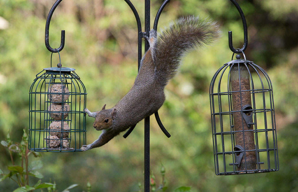 Shadows & Light: Squirrel Hijinks and Starling Madness