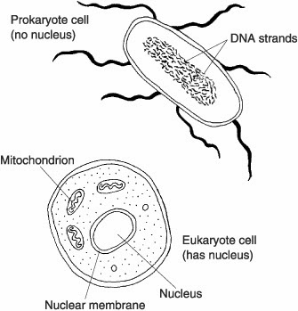 Prokaryote Coloring Answersheet Coloring Pages