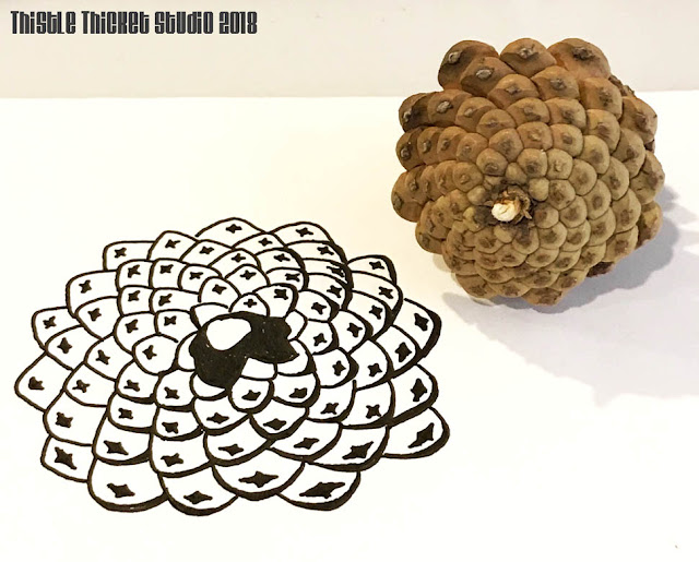 Pinecone Sketch By Thistle Thicket Studio. www.thistlethicketstudio.com