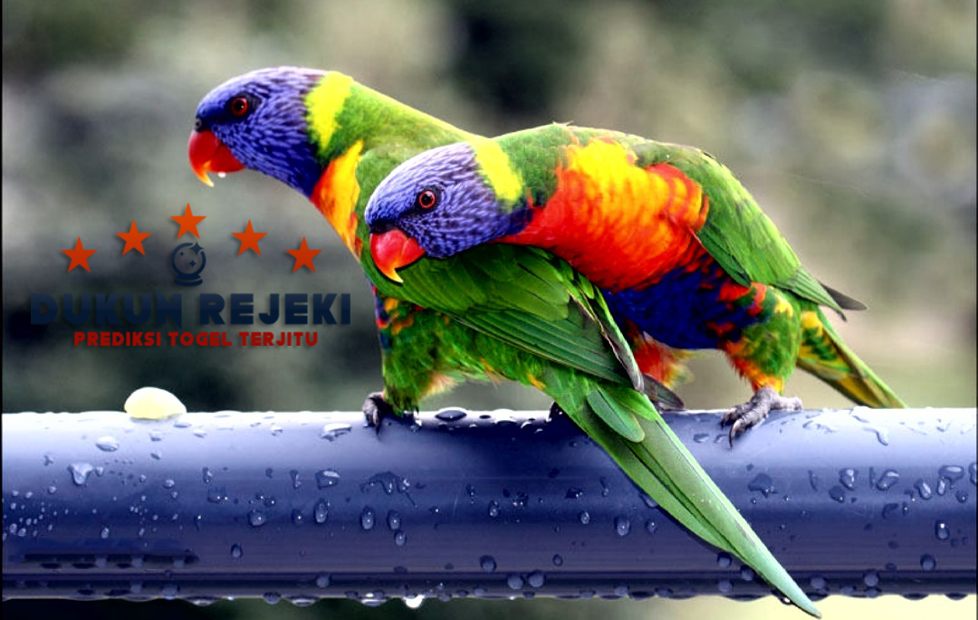 Burung-Burung Yang Paling Indah dan Langka di Dunia