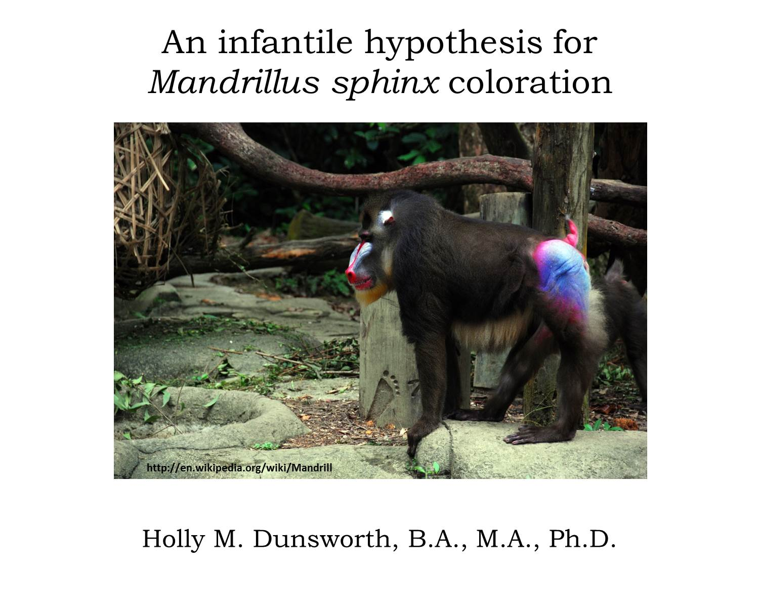 No other member in the whole class of mammals is coloured in so extraordinary a manner as the adult male mandrill charles darwin the descent of man