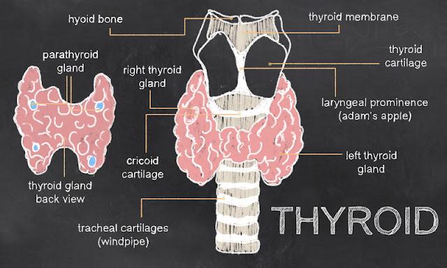 thyroid,thyroid hormone,underactive thyroid,thyroid disease,thyroid problems,hashimoto's,hypothyroidism,low thyroid,hypothyroid,hashimotos,thyroid health,hashimoto's thyroiditis,thyroid condition,thyroid problem,slow thyroid,thyroiditis,hashimoto,hashimoto's disease,thyroid hasimoto 2017,thyroid hair loss,thyroid symptoms,thyroid (symptom),low thyroid symptoms,thyroid antibodies,thyroid test,thyroid issue,thyroid issues,thyroid success stories