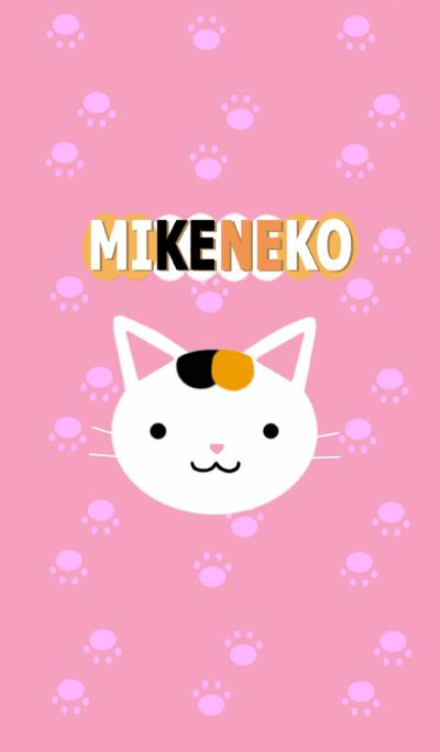 Japanese Bob Tail Cat