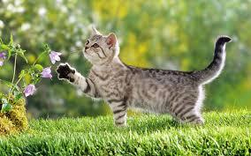 Bài văn tả con mèo nhà em.