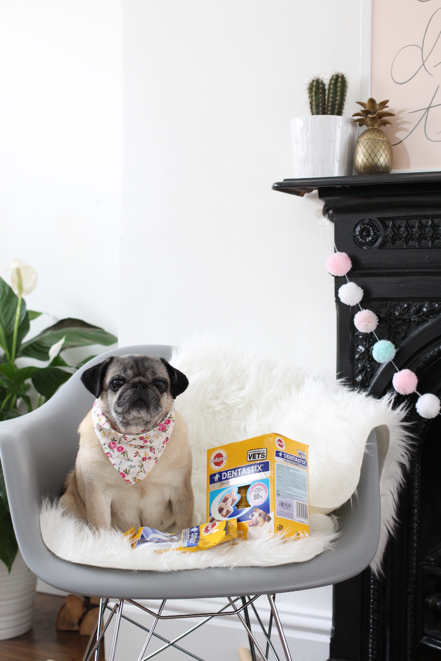 UK Blogger, Liverpool Blogger, UK Dog Blog, Pug Blog,