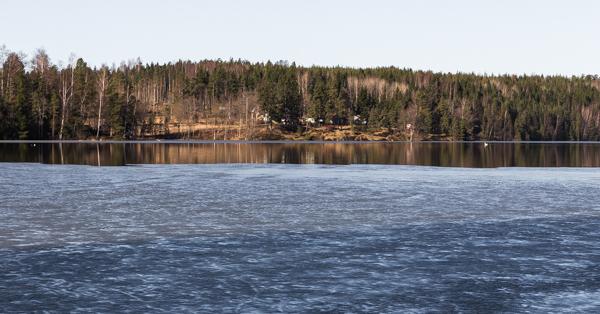 tyyni järven pinta ohut jää joutsen järvi heijastus