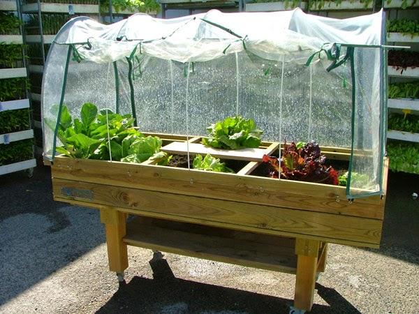 Cultivar el huerto casero la huerta casera en mesa de - Invernadero casero terraza ...